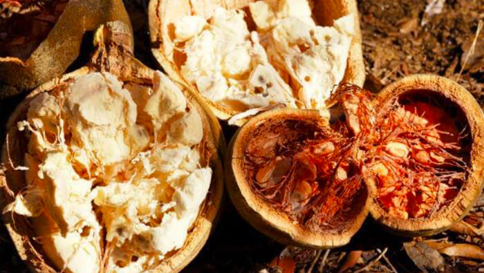 Meet the New Superfood: Baobab